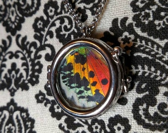 REAL Sunset Moth Urania Necklace Pendant