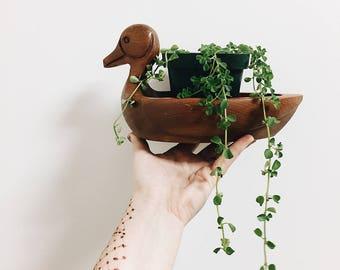 Solid Walnut Duck Planter / Solid Walnut Duck Bowl / Duck Decor / Wooden Duck