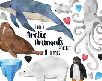 Arctic Animals Clipart - Arctic Winter Download - Instant Download - Watercolor Cute Polar Bear - Walrus - and more!