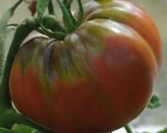 3 - Black Krim Heirloom Tomato Plants