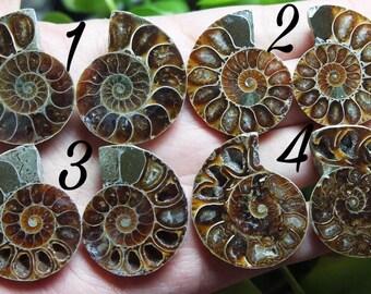 Matching Ammonite Pairs!