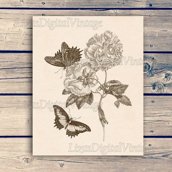 "Digital print, Butterfly print, Illustration vintage, Butterfly vintage, Butterfly printable, Peony print, Insect print, 11""x14""; 8""x10"" JPG"
