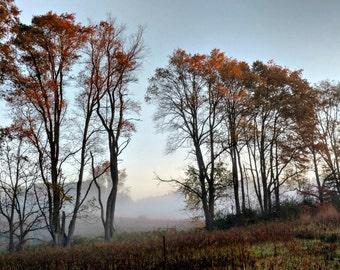 "Autumn Tree Fog Photo, Fall Photo, Tree Photo, Morning Fog Photo, Fall Decor, Line Of Trees, Nature Photo, 8x10 ""Foggy Autumn Tree Line"""