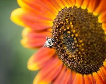 Sunflower Series 2/4 - Horizontal