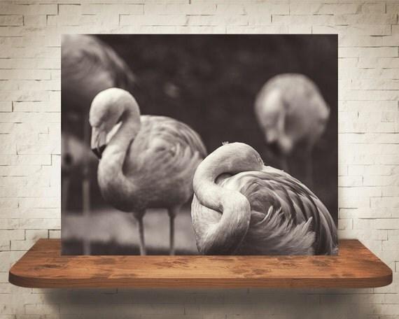 Black & White Flamingos Photograph - Fine Art Print - Nature Photography - Flamingo Pictures -  Home Decor - Wall Decor - Animal Artwork