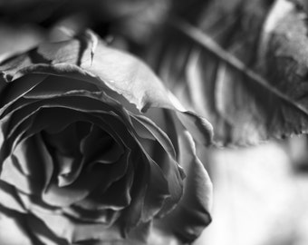 Rose picture, black and white, fine Art Photography Print
