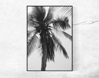 Palm tree palm black and white Modern art photography photography modern print poster 45 x 30 cm