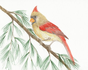 Cardinal Watercolor Print, Cardinal Art Print, Female Cardinal Bird Print, Cardinal In Pine, Christmas Art Print, Winter Art Print