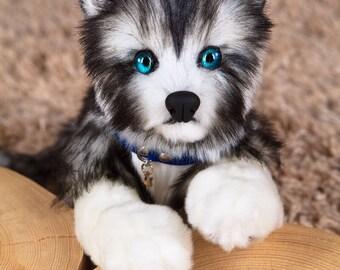Puppy Haski Dina
