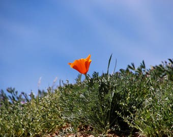 Poppy and the blue sky