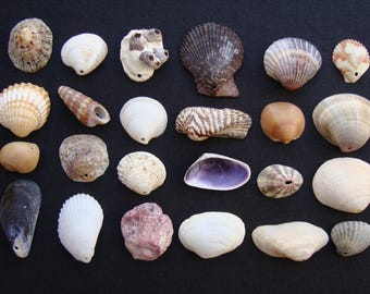 Mix of sea shells pierced-italian sea shells-a collection of 24 different shells