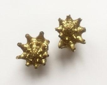 Goldy Maldivian shells earrings