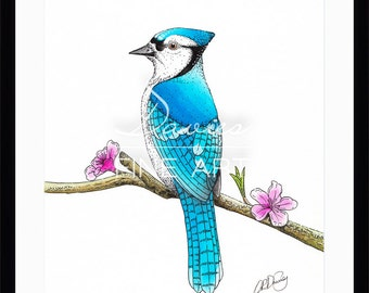 Limited Edition Print of a Blue Jay Bird - Watercolour and pen (150 Limited Edition Prints)
