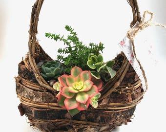Succulent Arrangement - Wicker Basket