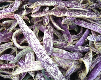 Phaseolus Vulgaris Dragon's Tongue Wax Bean Purple Striped Pods 25 Seeds #1123
