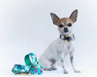 model colorful dog collar