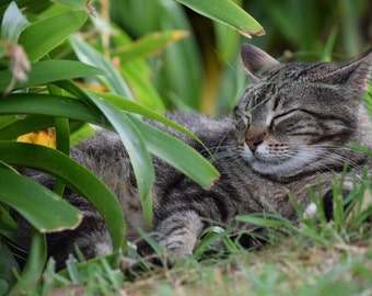 Photograph of a stray cat (comes in a white or black matted frame)