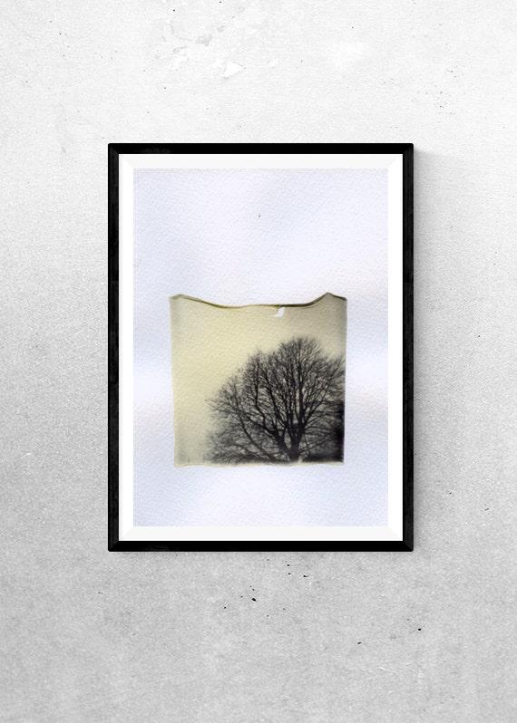 The Tree - Polaroid Emulsion Lift