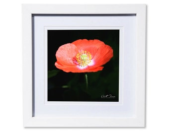 Poppy Photo Print or Canvas