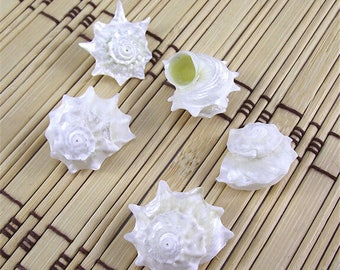 2-3cm Conch Natural Seashell 12pcs/Lot Diy Mediterranean Office Wall Art vintage Home Decoration Accessories