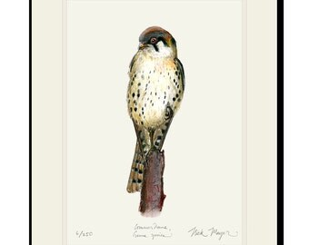 American Kestrel Limited Edition Signed Print