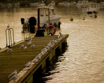 Seagulls on a Pier Digital Download For Sale - Original Bird Photography ...