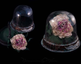 Toothy rose in the sphere.