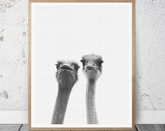 Ostrich Print, Ostrich Wall Art, Ostrich Printable Art, Ostrich Photography, Ostrich Black and White Art, Ostrich Decor, Ostrich poster