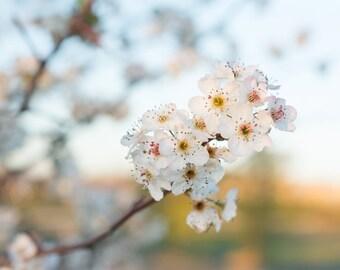 Spring Flowers - Glossy Print