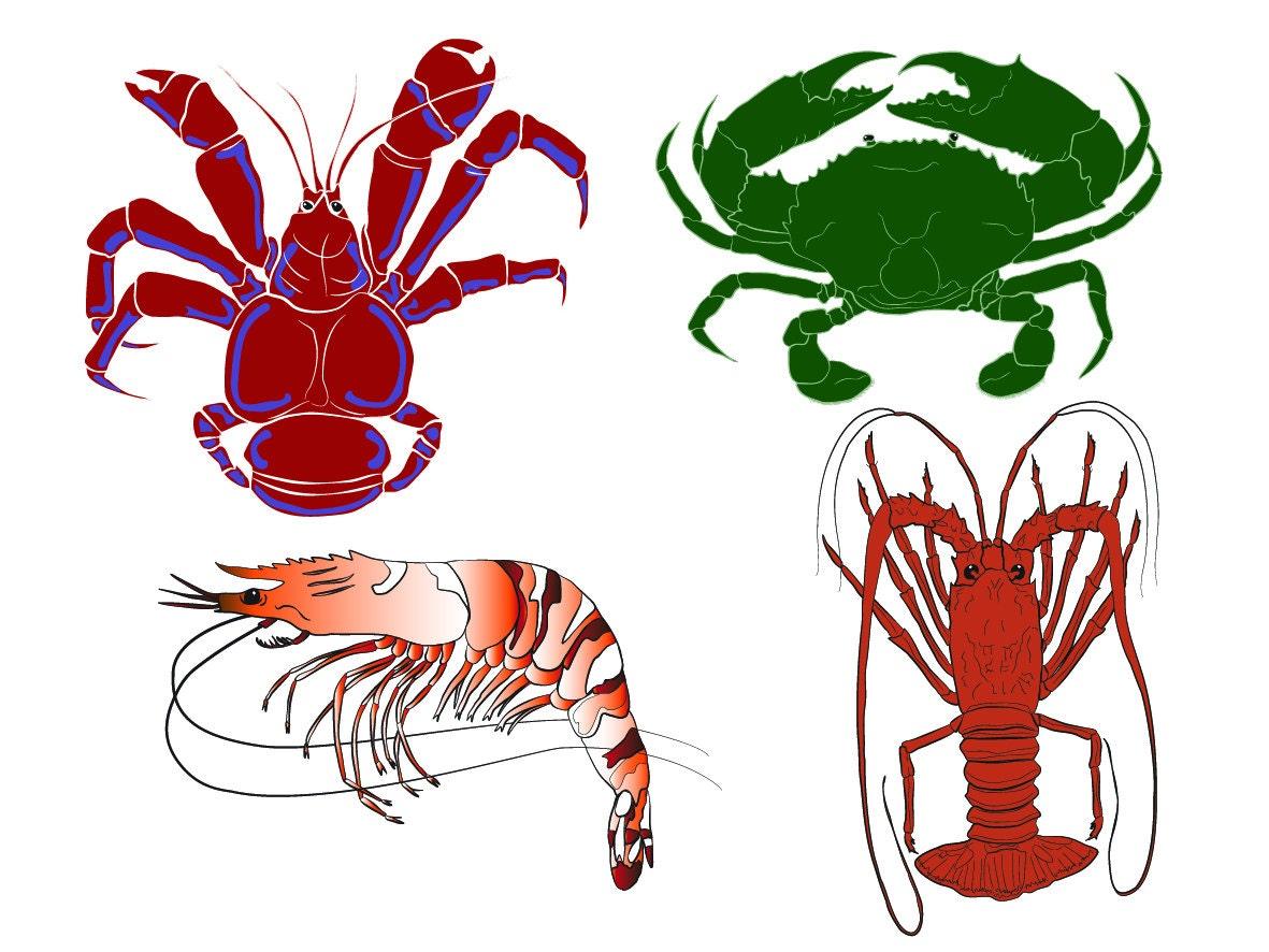 Mud crab, Coconut Crab, Lobster, Tiger Prawn marine life clip art, instant  download, vector illustrations, seafood images, crustaceans