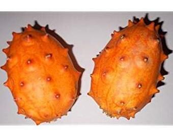 Kiwano 10 seeds/seeds African Horn cucumber fruit & vegetables