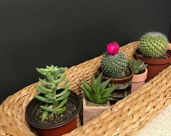 Straw tray/planter