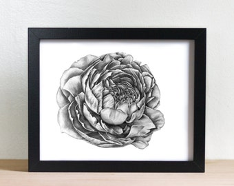 Peony Pencil Drawing Giclée Print Fine Art Wall Art Graphite Illustration Flower Drawing Peony Drawing Wall Decor Home Decor Gifts For Her