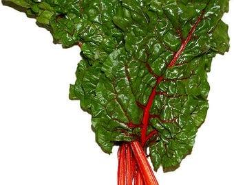 300 Rhubarb RED SWISS CHARD Perpetual Spinach Beta Vulgaris Vegetable Seeds