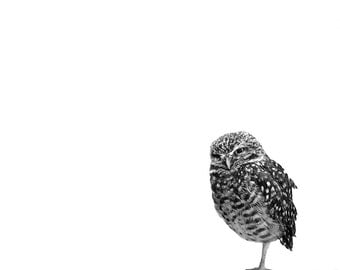Minimalist Owl Artwork // Baby Gift // Nursery Art // Modern Wall Art // Animal Print // Black and White Photography // Contemporary Art