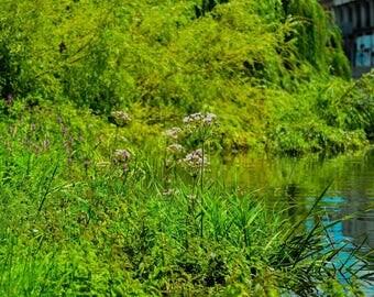 Vegetation on the river bank