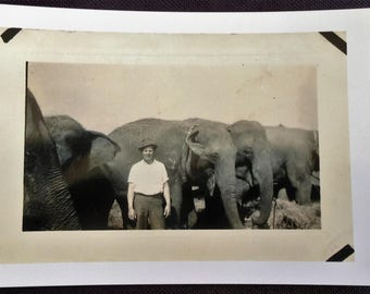 """Elephants - Cole Brothers Circus 1938 Frank Collins as """"Bullhand"""" -  See description"""