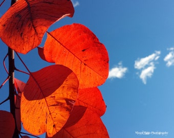 Limited Edition Print ~ Red Leaf