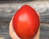 Amish Paste - Tomato - Heirloom Garden Seed
