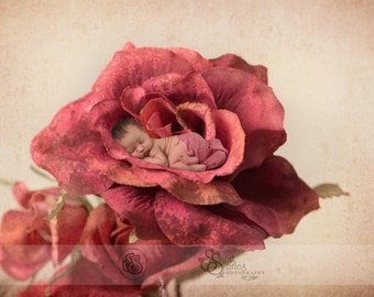 Newborn Red Rose Digital Backdrop