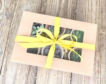 Succulent gift box of 6 planted live succulents in terra cotta pots