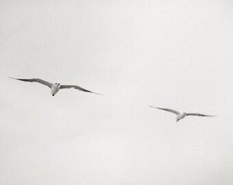 nature fine art photography, bird photography, bird art, fine art print, wall decor