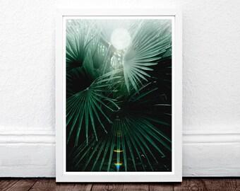 Botanical Print, Tropical Leaf Print, Palm Leaf Print, Plant Photography, Minimalist Wall Art, Tropical Leaf Poster, Botanical Decor, Plant