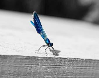 Dragonfly photo, Nature photo, Insect photo, Macro photo, photography, Instant photo, Art photo, digital photography, Bug Photo