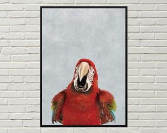 MACAW print, exotic bird art, rainforest art, parrot poster, macaw poster, macaw art, parrot picture, exotic bird picture, bird print decor