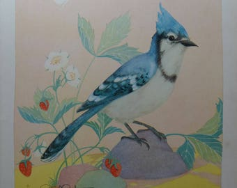 1931 Fern Bisel Peat Blue Jay Vintage Antique Bird Print
