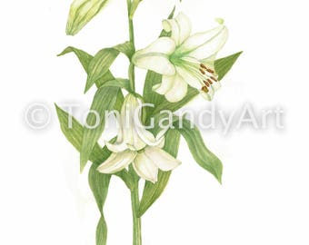 Longiform Lily | Greeting Card | x3
