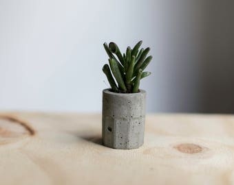 Mini concrete planter, cement planter, modern, air plant planter, succulent planter