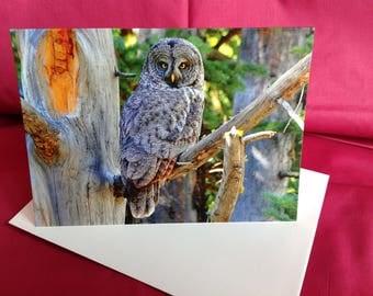 "Owl art, Owl photograph, Owl note card. ""Great Gray owl - daytime hunter."""