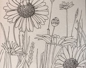 Daisies: original pen and ink drawing sketch